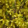 The pollen… THE POLLEN