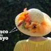 Cintucky der Mayo