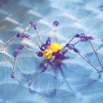 Spider_2911